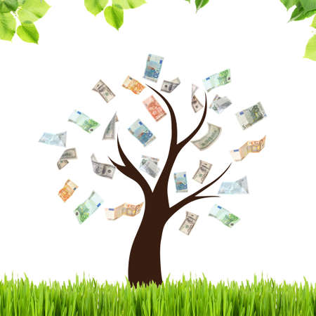 Money tree with grass on white background.