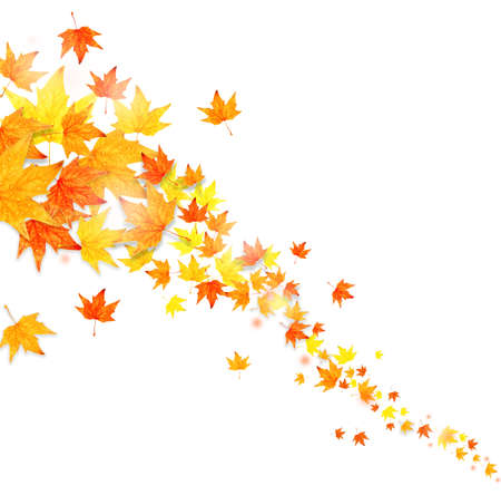 Autumn falling leaves isolated on white Stock Photo
