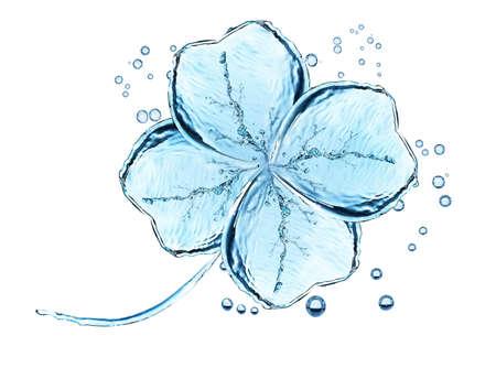 Water pattern of clover leaf on white background. Reklamní fotografie - 78292253