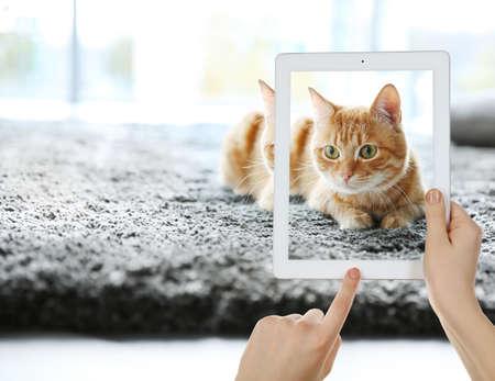 Manos femeninas que toman la foto del gato lindo en la tableta.