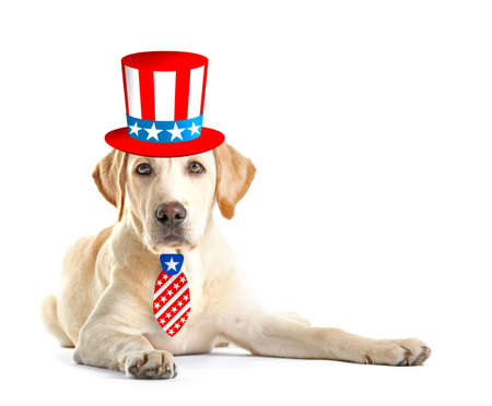 Cute dog with Uncle Sam hat and tie on white background. USA holiday concept. Stock Photo