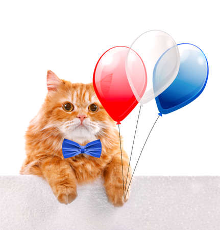 Cute cat with air balloons and bow-tie on white background. USA holiday concept. Stock Photo