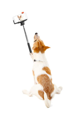 Funny puppy taking selfie on white background. Stock Photo