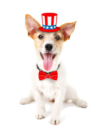 Cute dog with Uncle Sam hat and bow-tie on white background. USA holiday concept. Stock Photo