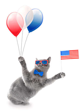 Cute cat with USA flag and air balloons on white background. USA holiday concept.