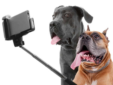 Funny dogs taking selfie on white background.
