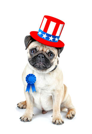 Cute dog with Uncle Sam hat and award ribbon on white background. USA holiday concept.