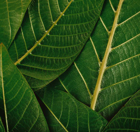 Fresh green leaves texture background