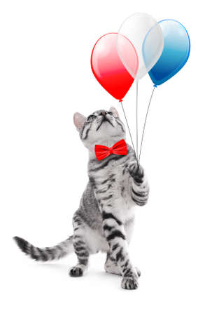Cute cat with bow-tie and air balloons on white background. USA holiday concept. Stock Photo