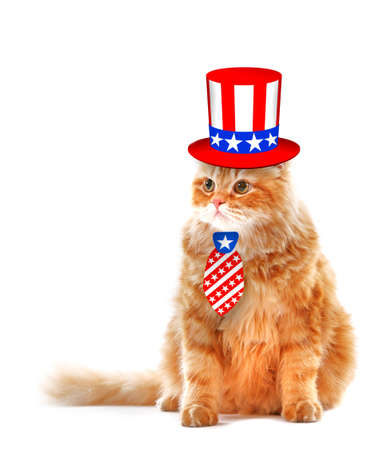 Cute cat in Uncle Sam hat and tie on white background. USA holiday concept. Stock Photo