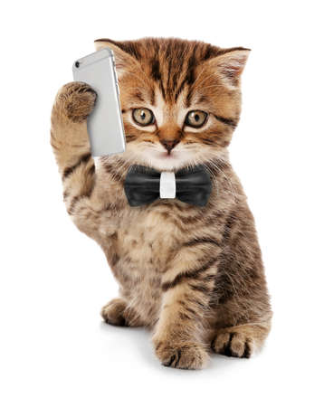 Small funny kitten with mobile smart phone and tie isolated on white Stockfoto