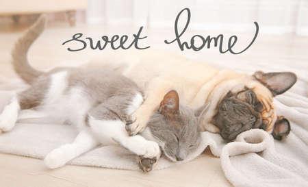 フレンチ ブルドッグと床に眠っているかわいい猫。テキスト スウィート ホーム。