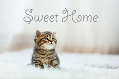 Nettes Kätzchen, das auf Teppich sitzt. Text SWEET HOME.