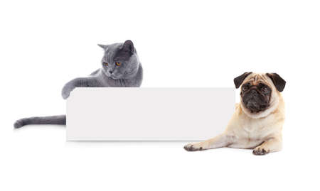 Cute cat and dog with blank card on white background Stock Photo