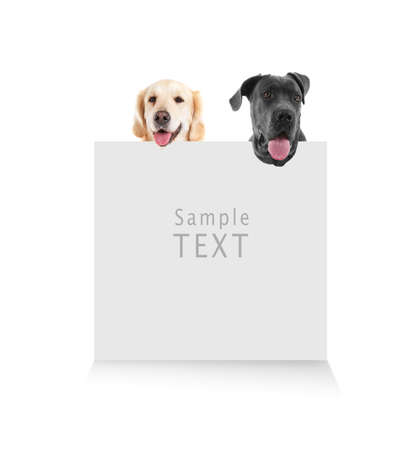 Cute dogs with blank card on white background