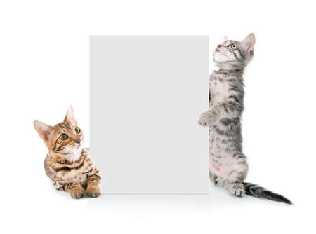 Cute cats with blank card on white background