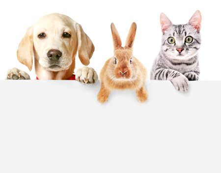 Cute friendly pets on white background