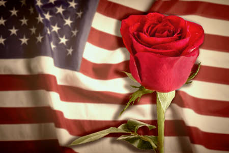 Rose on USA flag background. Symbol of America Stock Photo - 88487309