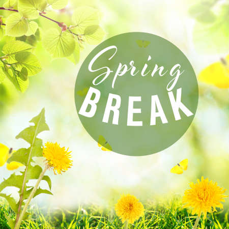 Text SPRING BREAK on nature background. Additional education concept Stock Photo