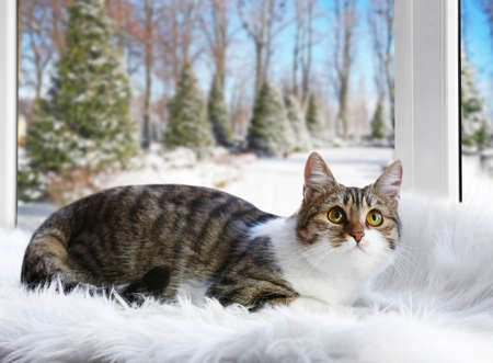 Cute cat on windowsill and beautiful view through window Stock Photo