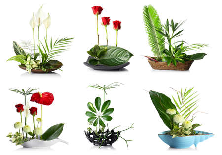 Creative floral compositions on white background Stok Fotoğraf