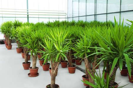 Beautiful plants at greenhouse Stock Photo