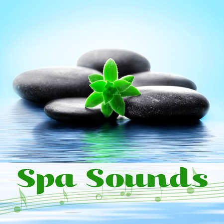 Spa sounds concept. Stones and plant in water Stock Photo