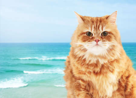 Cute cat on seashore background Stock Photo