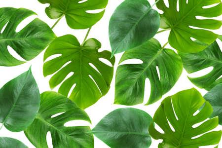 흰색 배경에 % 00 잎 녹색
