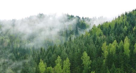 Árboles sobre fondo blanco