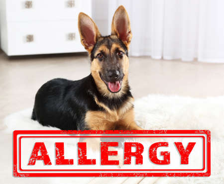 Animal allergy concept. Cute dog at home