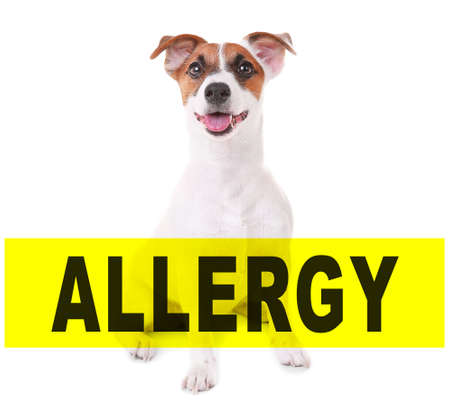 Animal allergy concept. Dog on white background