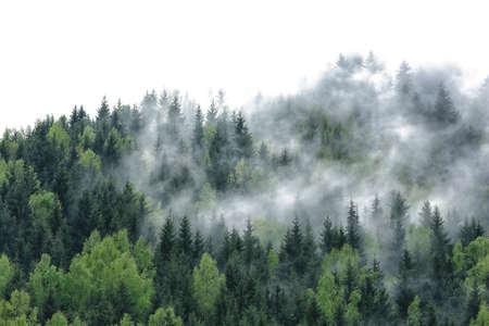 Trees on white background Stock Photo