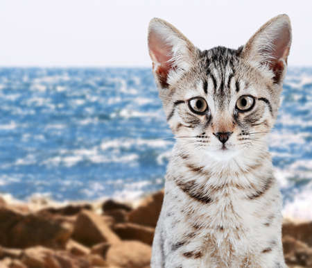 Cute kitten on seashore background
