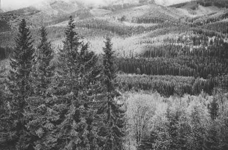 90496051 black and white landscape background