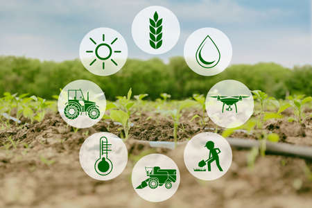Icons and field on background. Concept of smart agriculture and modern technology Banco de Imagens