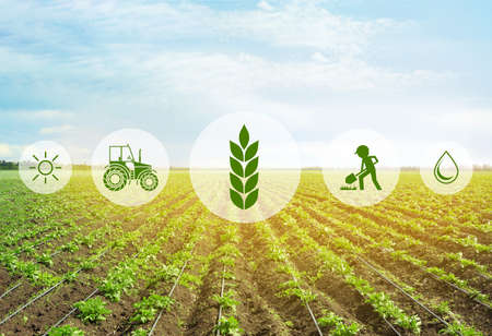 Icons and field on background. Concept of smart agriculture and modern technology Stock Photo