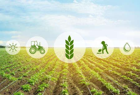Ikony i pole w tle. Koncepcja inteligentnego rolnictwa i nowoczesnych technologii