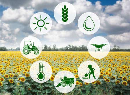 Ikony i pole na tle. Koncepcja inteligentnego rolnictwa i nowoczesnych technologii