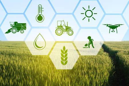Iconos y campo en el fondo. Concepto de agricultura inteligente y tecnología moderna