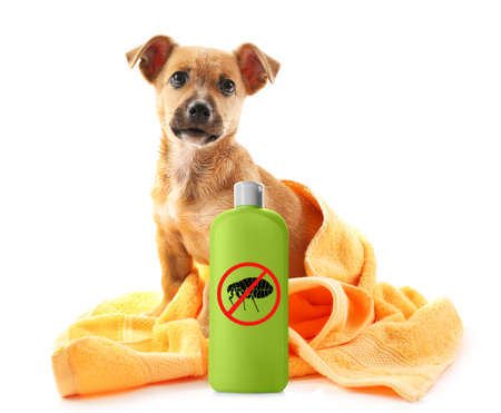 Puppy with towel and bottle of flea shampoo on white background Stock Photo
