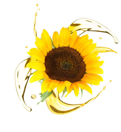 Sunflower and cooking oil splashes on white background