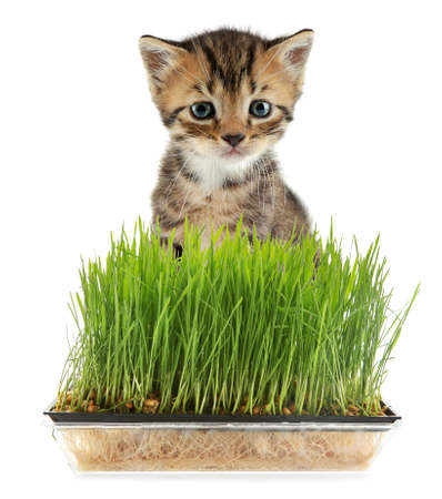 Cute kitten and wheat grass on white background Stock Photo