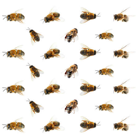 흰색 배경에 꿀 꿀벌 % 00