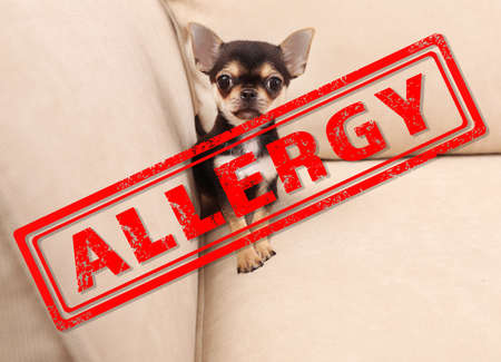 Animal allergy concept. Little dog at home Stock Photo