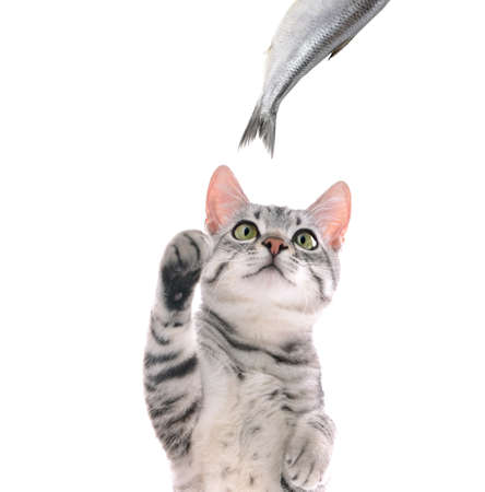 Cute cat and fish on white background