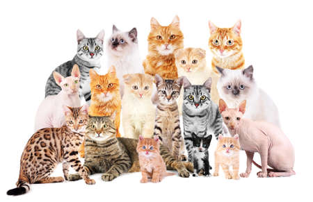 Group of cute cats on white background