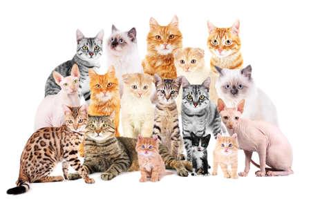 Grupa słodkie koty na białym tle