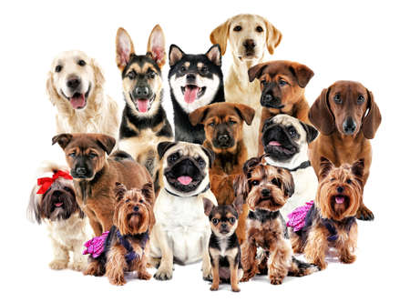 Group of cute dogs on white background Stock fotó