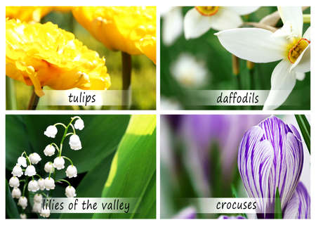 Collage of beautiful flowers with names